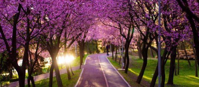 Primăvara în Timișoara